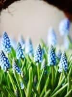 Blomsterkurv