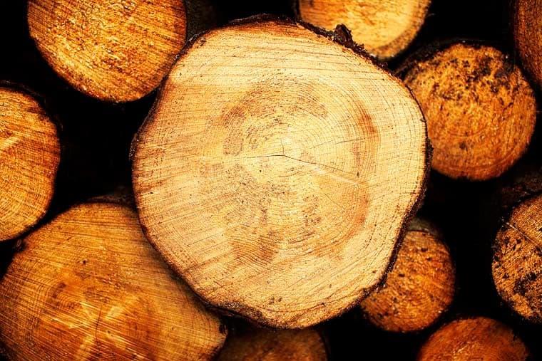 Træstamme – årringe